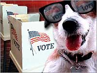Dog Vote (Glasses_PollBooth)