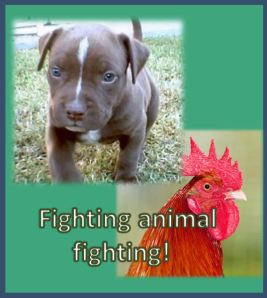 animalfighting