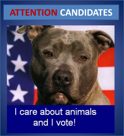 ATTENTIONCANDIDATES