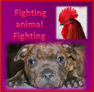 fightinganimalfighting