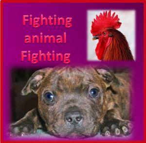 fightinganimalfighting