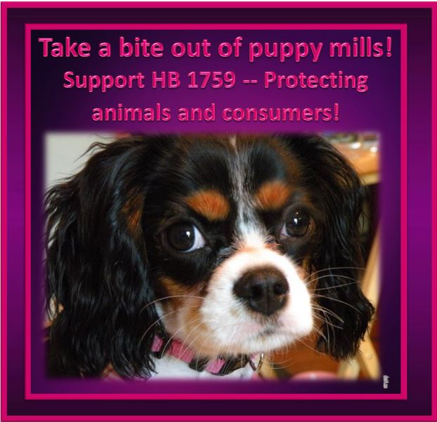 Humane Pa Support Hb 1759 Pet Store Disclosure Laws Protect