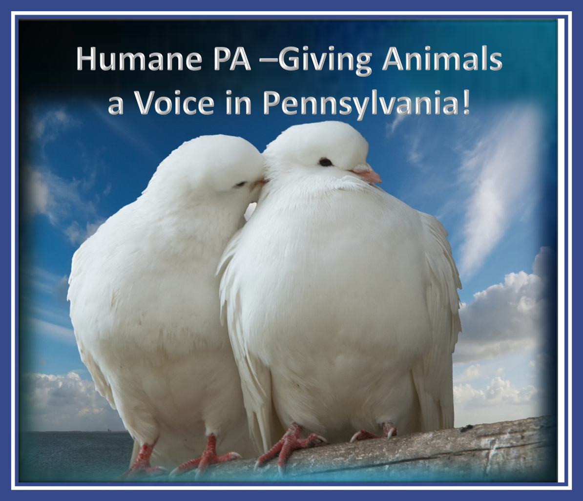 Humane pa sample letters to the editor ending pigeon shoots there is currently a bill languishing in the state senate sb 612 that would ban cruel live pigeon shoot contests opponents of the bill try to spin to altavistaventures