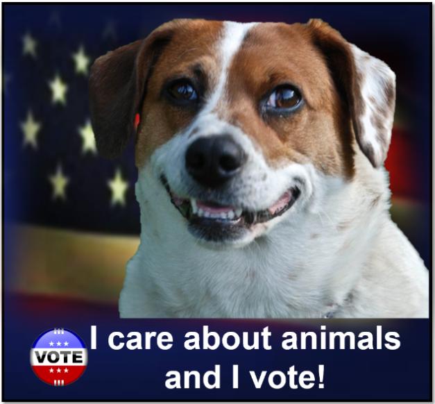 vote33