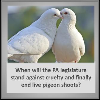 pigeonshoot
