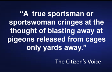 Citizen's voice