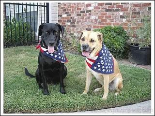 patriotic-pets-4th-of-july-dogs (2)