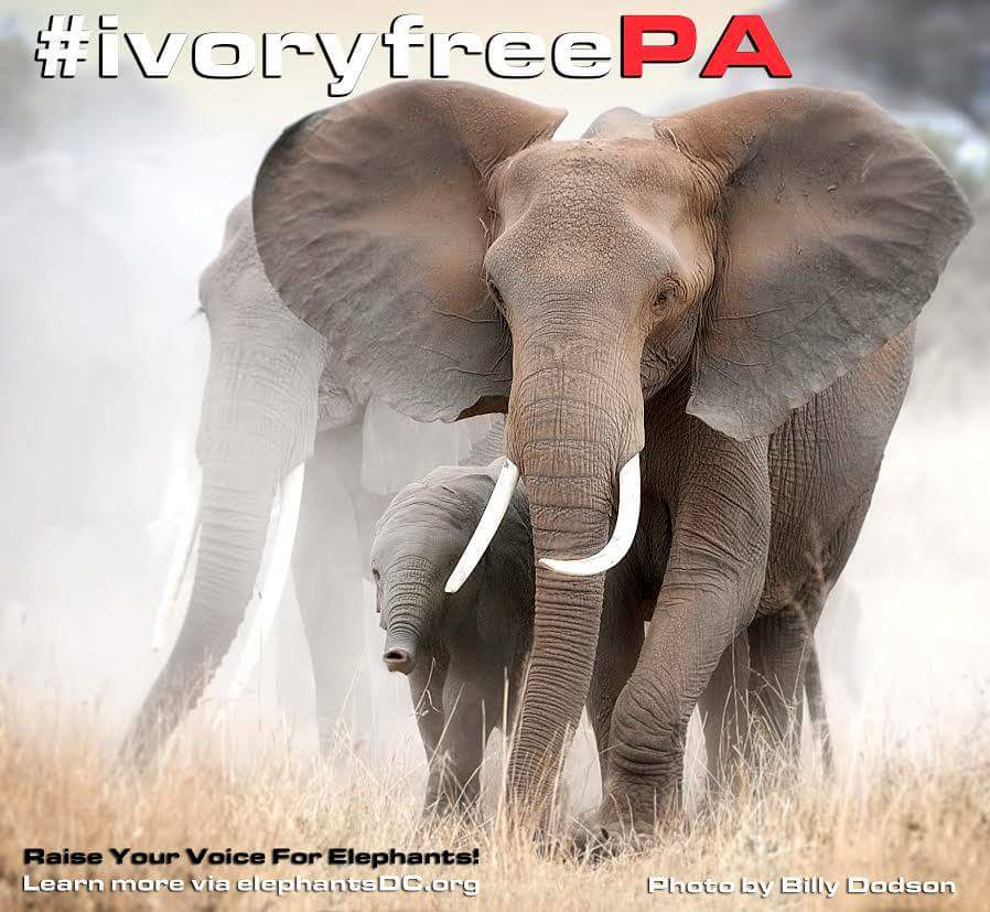 297f49b2cd2f End the Ivory Trade in Pennsylvania!