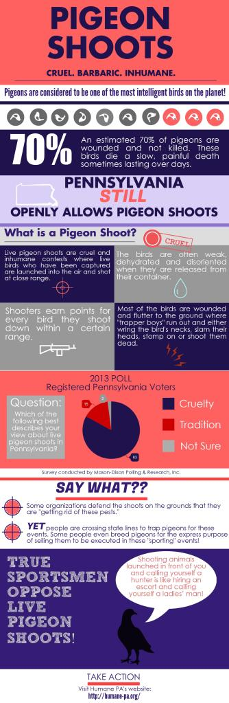 Pigeon Shoot Infographic without pics