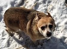 Cary's fat dog