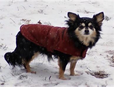 Sweatpea Graces dog
