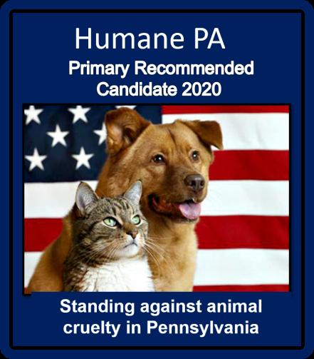 primary 2020